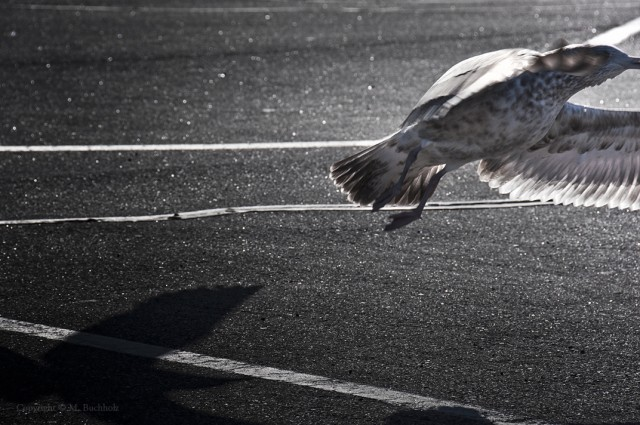 Takeoff; Seagull
