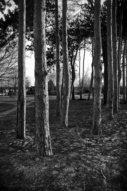 Urban Forest; Portsmouth, NH