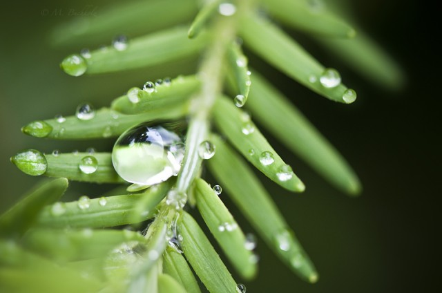 Hanging On; Water Droplets