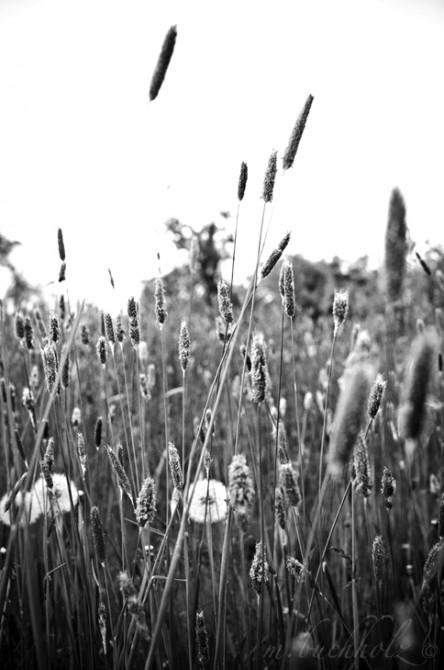 Black & White Fields