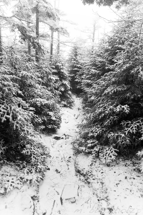 Snow Dusted Trail Near Cabin