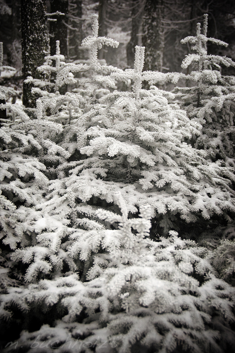 Snow Covered Tree Near Cabin
