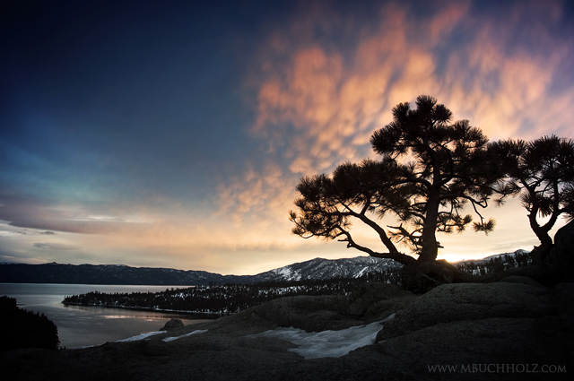 Pine Tree Silhouette; Sunrise, Emerald Bay, Lake Tahoe, California