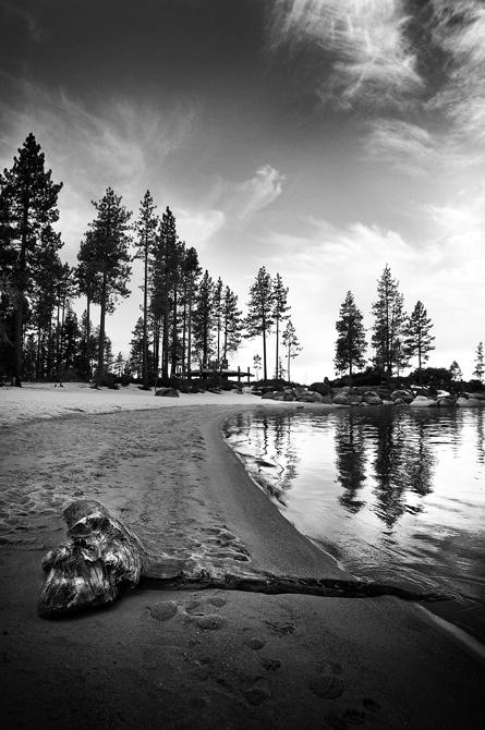 Driftwood; Lake Tahoe's Sand Harbor, Nevada