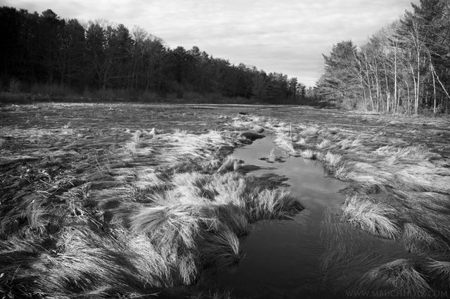 Wetlands; Kittery Point, Maine