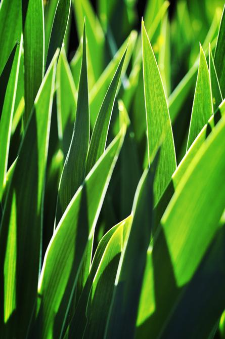 Grass Blades III