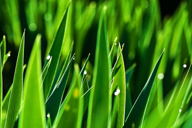 Grass Blades II