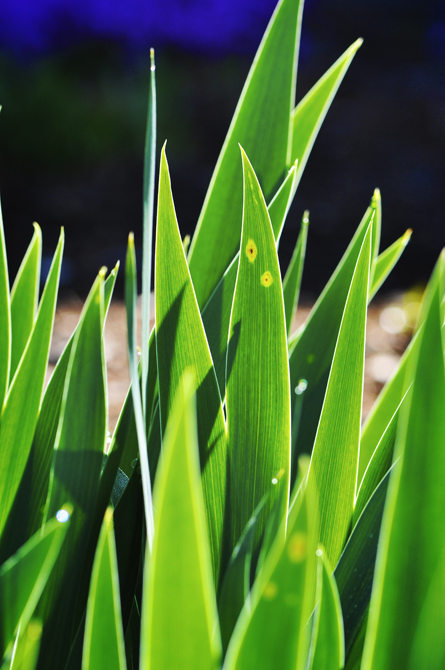 Grass Blades I