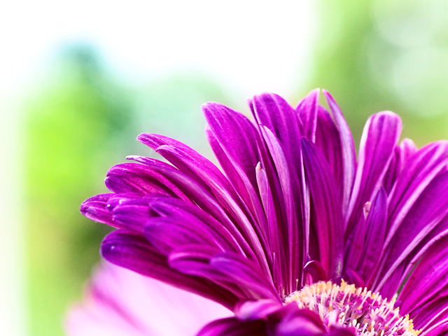 Outreach; Flower Petals