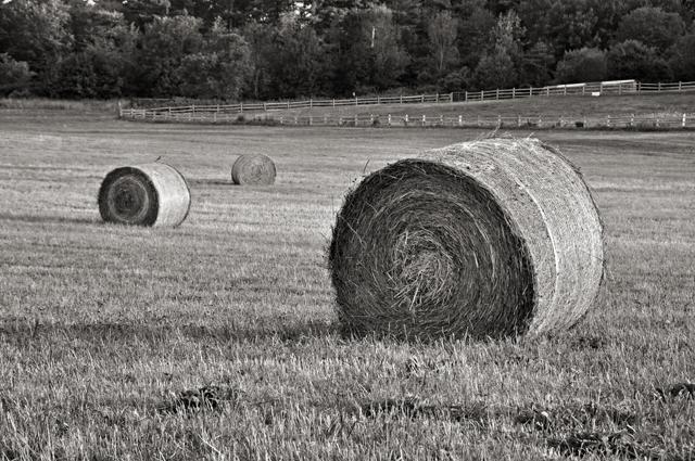 Hay Bale; Farm, Dover, NH