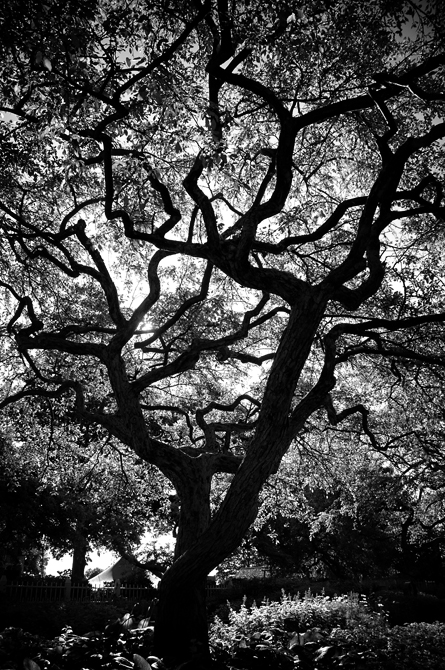 Sun Screen; Prescott Park Garden, Portsmouth, NH