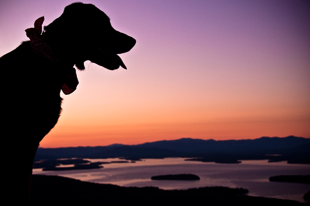 A Lab's First Winnipesaukee Sunset; Mt. Major, Alton, NH