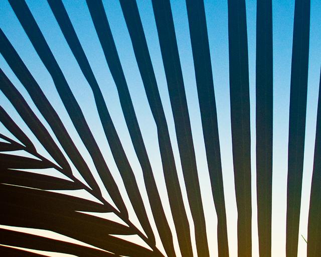Zebra Print, Palm Tree; Miami Beach, FL