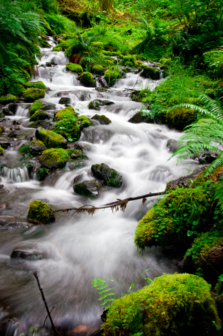Cascading Creek; Hoh River Rain Forest at Olympic National Park, Washington