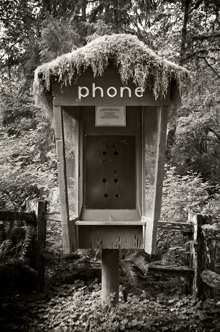 Phone, Hoh River Rain Forest at Olympic National Park, Washington
