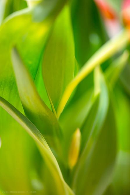 Interweave, Plants
