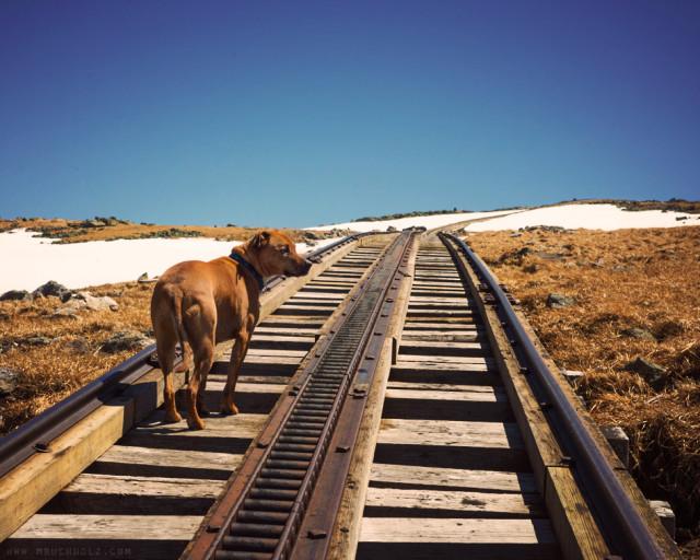 On Track; Cog Railway, Mt. Washington, NH
