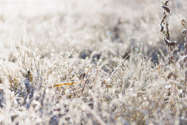 Morning Frost, Field; Ossipee, New Hampshire