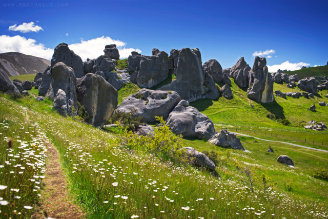 Flower Path; Castle Hill, New Zealand
