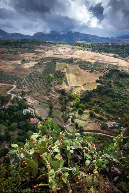 Countryside; Ronda, Spain
