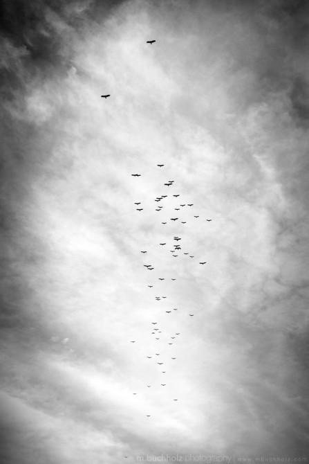 Flying North; Punta Uva, Costa Rica
