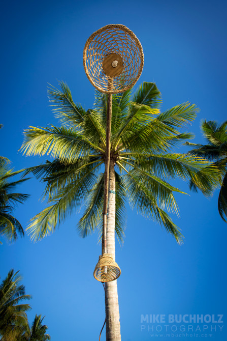 Palm Tree Lamp Posts; Palawan, Philippines