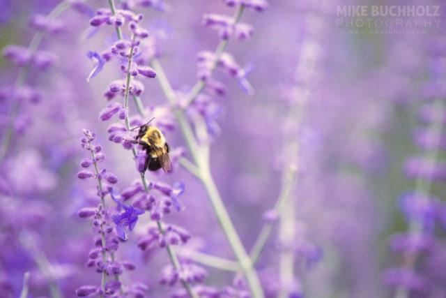Climbing for Nectar