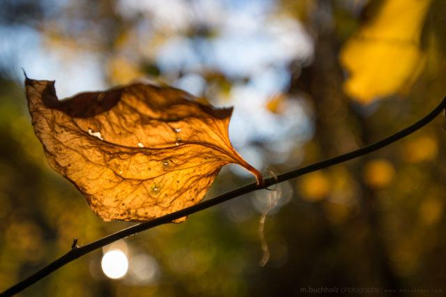 Last Remnants of Autumn