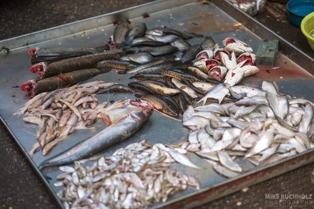 Curbside Fish Market; Yangon, Myanmar