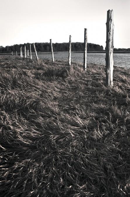 Wetlands Fence; Rye, NH