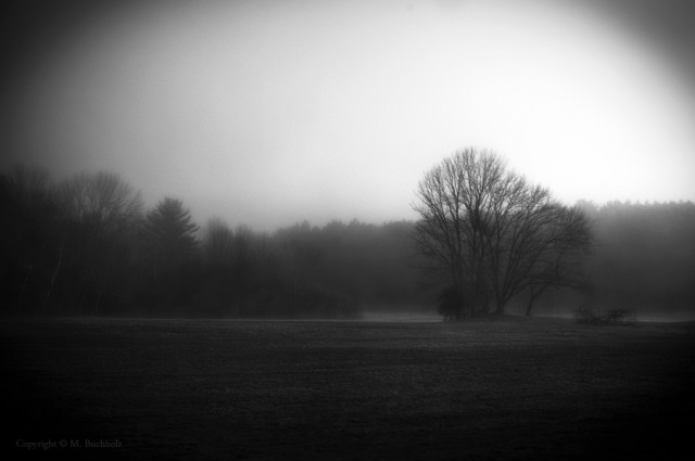 Early morning fog on NH field