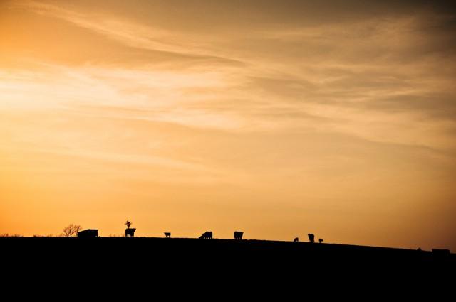 Animal Farm Sunset; Missouri