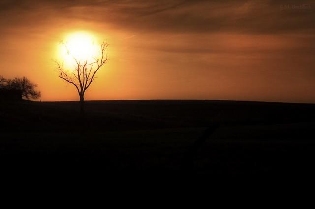 Tree Holding Up The Sun