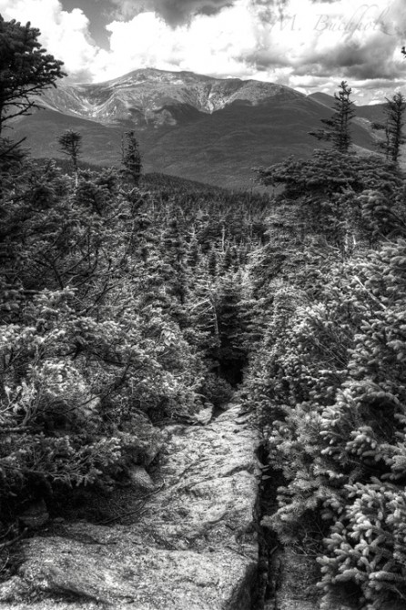 Mt. Washington from Wildcats Trail