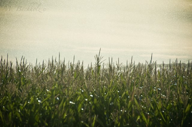 Fields of Idaho